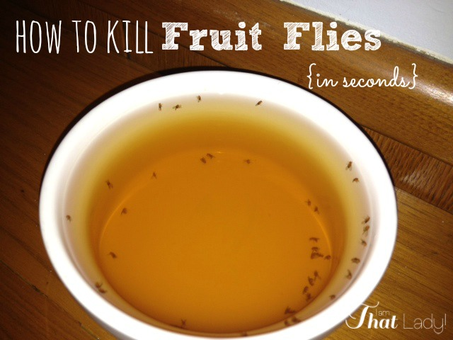Fruit flies may be the most annoying creatures in the world! I tried just about everything to kill them, but this was the only thing that worked. This is how many flies I caught in 5 minutes!