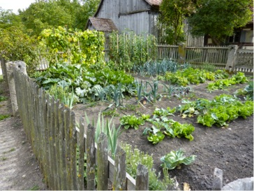 Make Sure That Your Garden Area Has Good Drainage. The Last Thing You Want  To Do Is Drown Your Plants! Your Space Should Be Slightly Elevated So That  Any ...