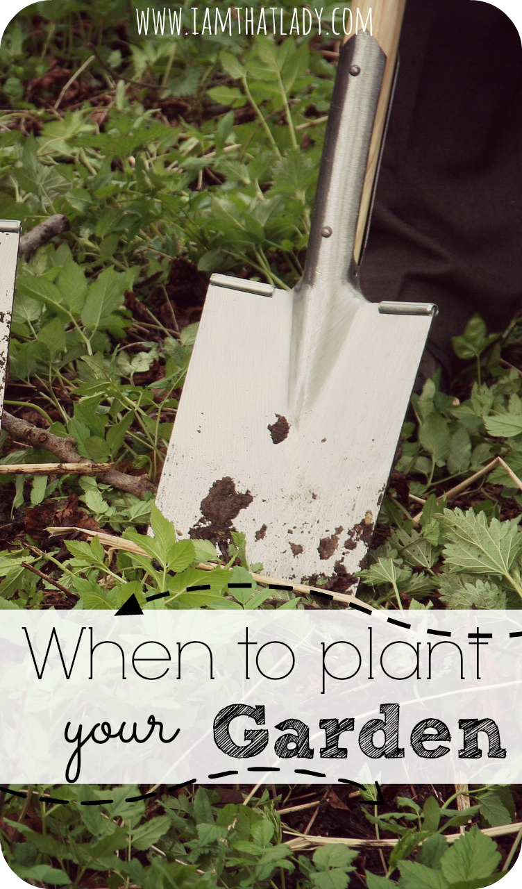 Gardening is one of my favorite things to do but I always wondered when the best time is to plant everything? Here is a list of the when to plant a garden; including which crops to plant when and much more!