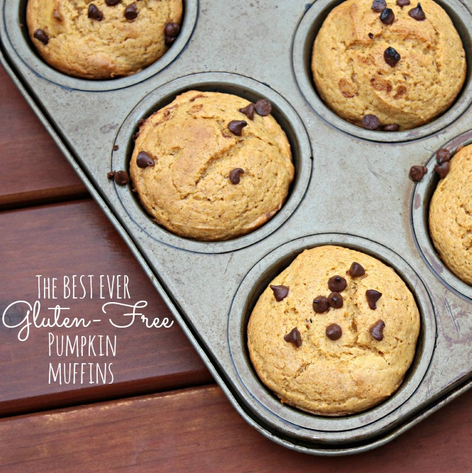 Are you looking for a gluten-free pumpkin muffin recipe? This is the one! It is moist and you would never guess it is gluten-free!