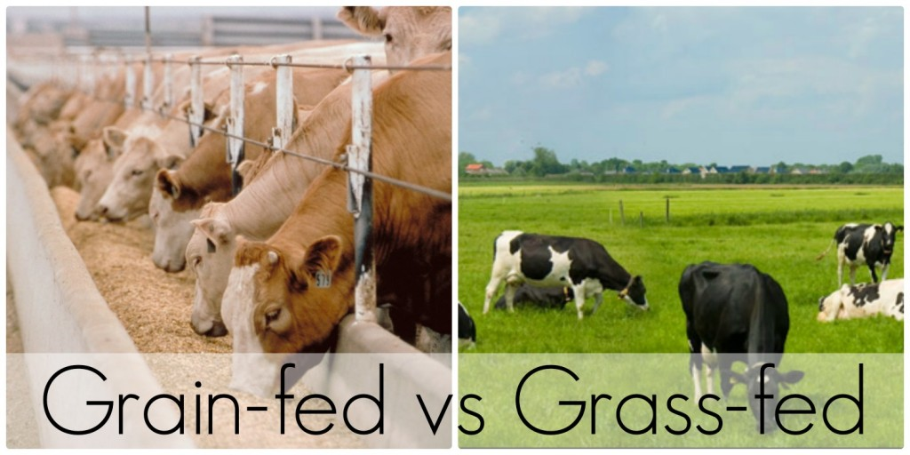 Grass-Fed vs. Grain-Fed Beef — What's the Difference?